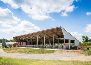 Heifer Barn with Tie Stalls by Creek View Construction