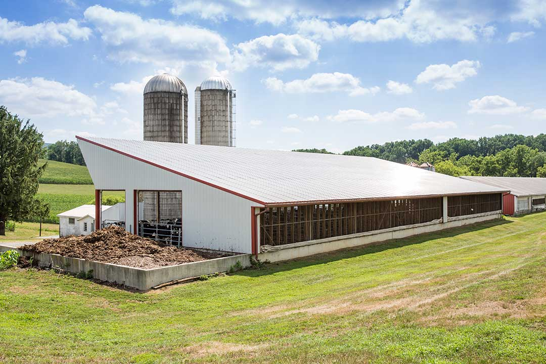 Heifer Barn with Curtains by Creek View Construction